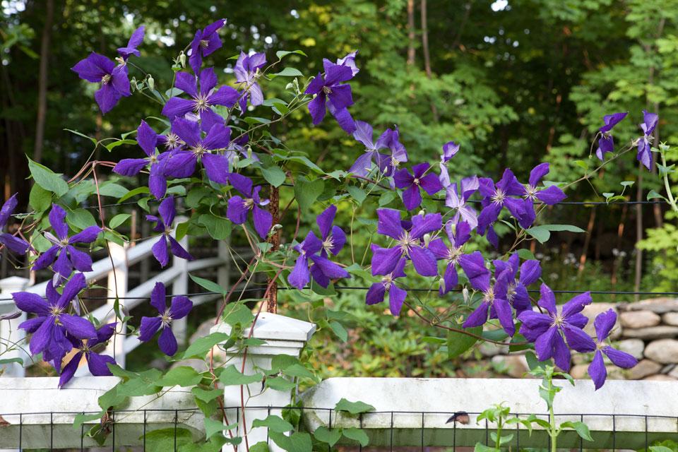 blue_fence_2723