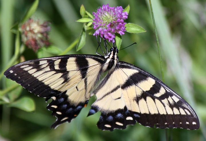 butterfly_3564