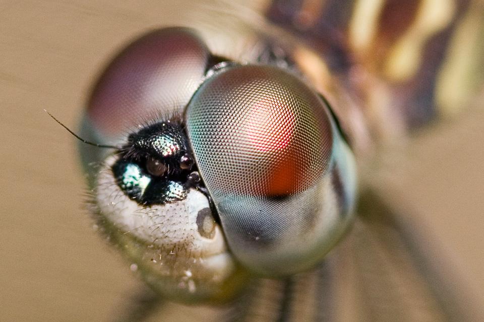 Dragonfly-2-10
