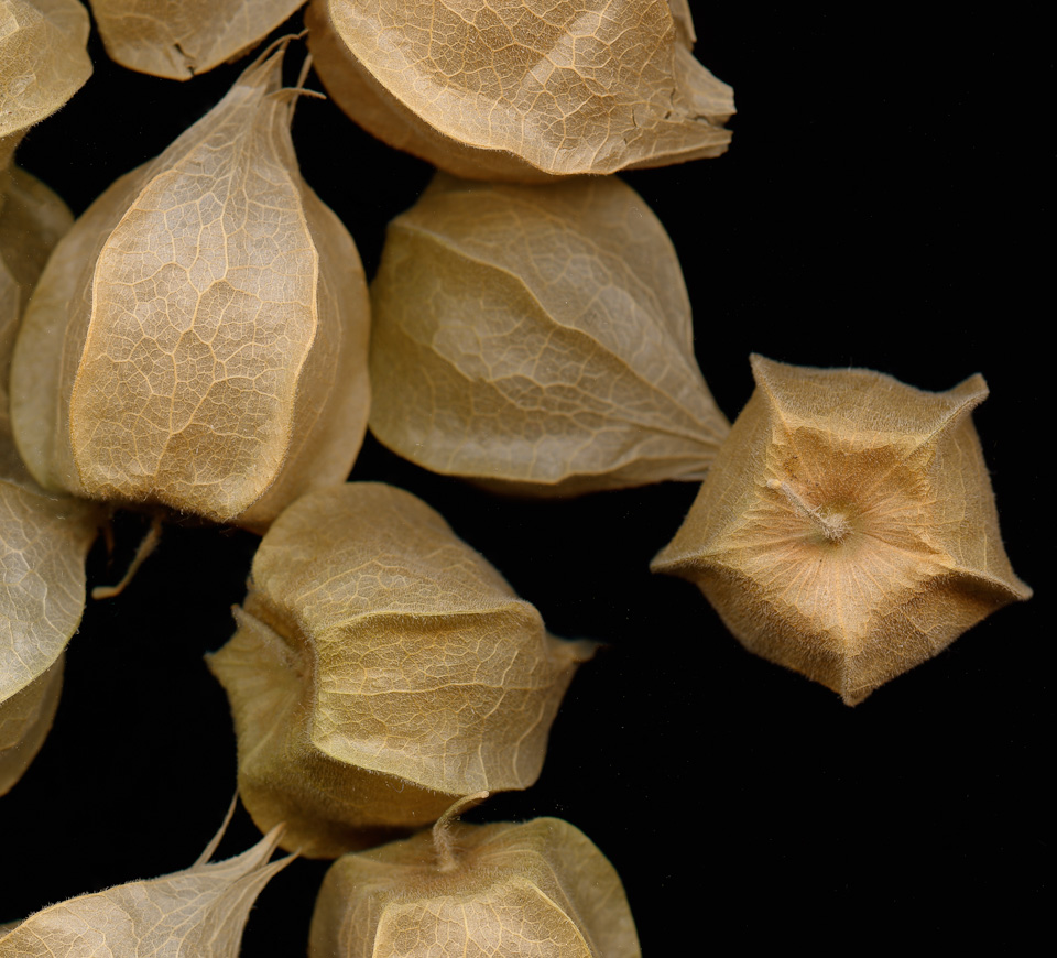 cape_gooseberries-2-2