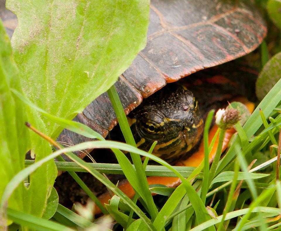 tortoise_6783