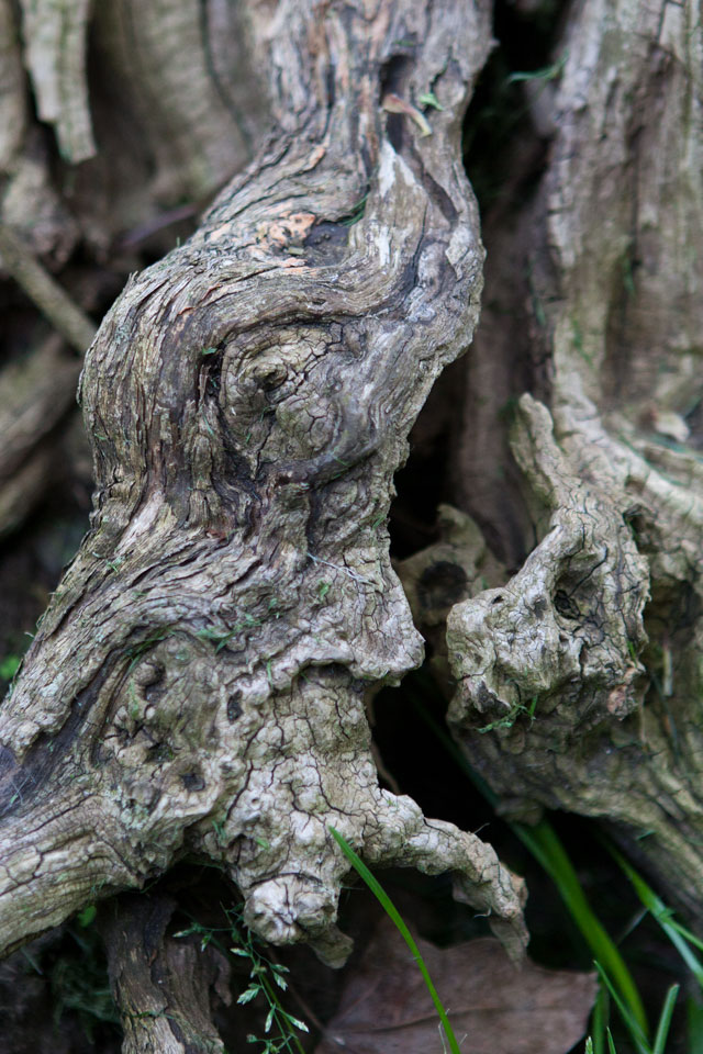 tree_faces_2147